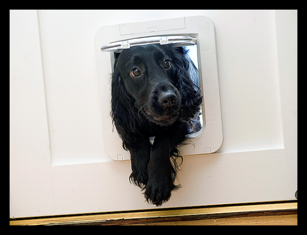 NEW-SureFlap-Microchip-Pet-Door-Available-for-Small-Dogs-